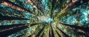 CLIM_ALTERATI. INIZIATIVA PUBBLICA A FORLI' SUI CAMBIAMENTI CLIMATICI