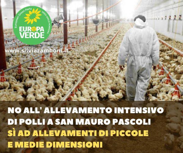 NO ALL'ALLEVAMENTO INTENSIVO DI POLLI A SAN MAURO PASCOLI