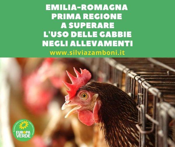 EMILIA-ROMAGNA PRIMA REGIONE A SUPERARE L'USO DELLE GABBIE NEGLI ALLEVAMENTI